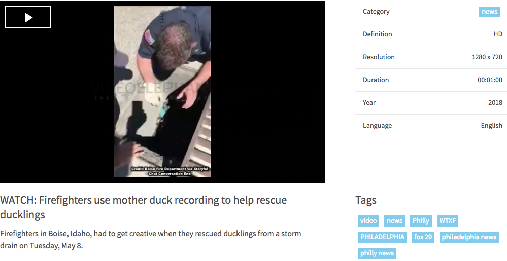 FOX Firefighters use mother duck recording to help rescue ducklings