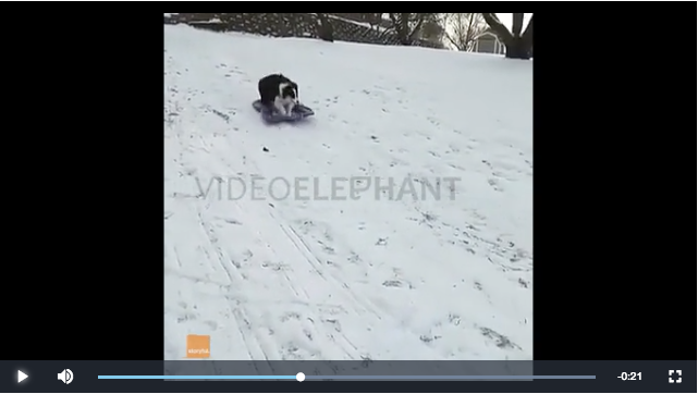 Clever Dog Takes Herself Sledding, Storyful
