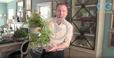 gardening video indoor planting