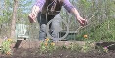 gardening video content garden pests