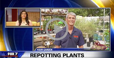 gardening video content repotting plants
