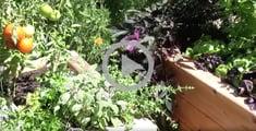 gardening videos irrigation system